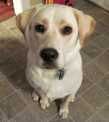 Our dog Jasper