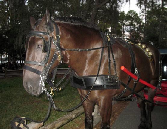 Fort Wilderness Horse