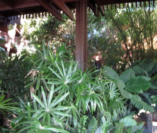 Tropical Foliage at the Polynesian Resort
